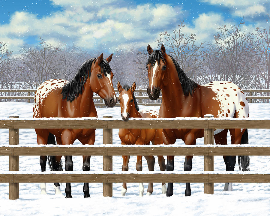 Horses Painting - Bay Appaloosa Horses In Snow by Crista Forest