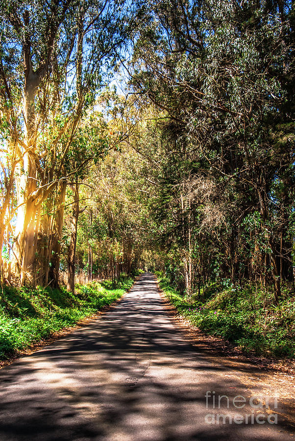 Bodega Bay Photograph - Bayhill Road Bodega Bay Sonoma County by Blake Webster