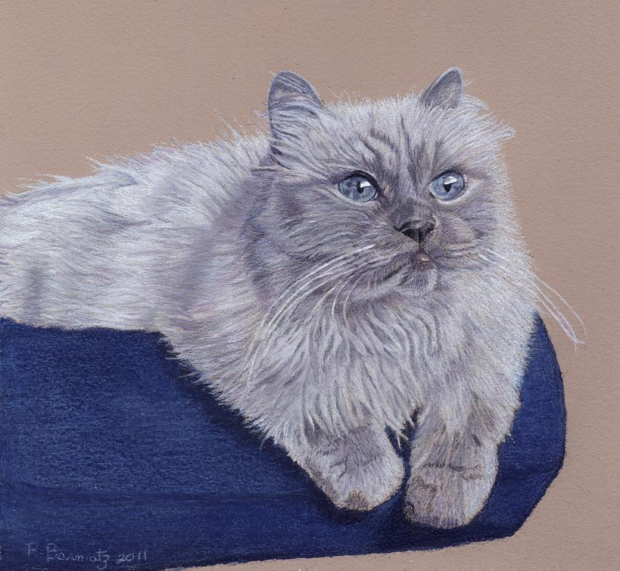 Cats Painting - Bayou - Portrait Of A Himalayan by Patricia Barmatz