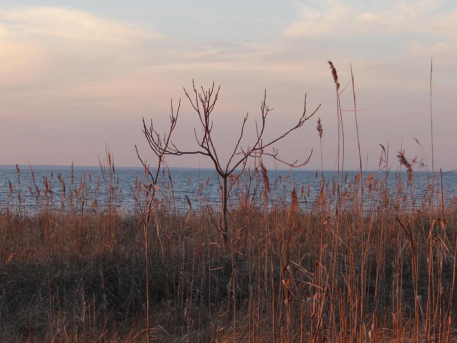 Bay Photograph - Bayside by Bill Helman