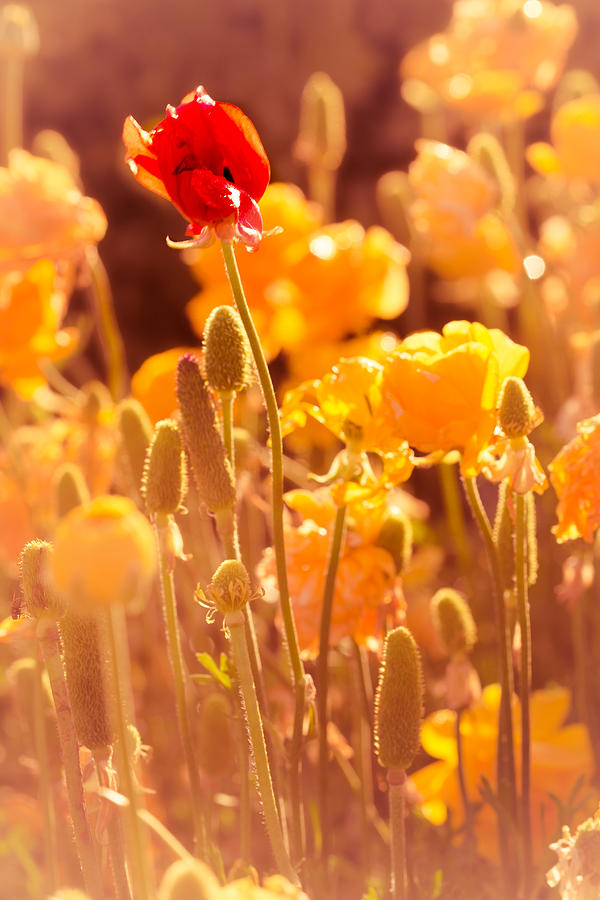 Flowers Photograph - Be Different Be Good by Mark Perelmuter