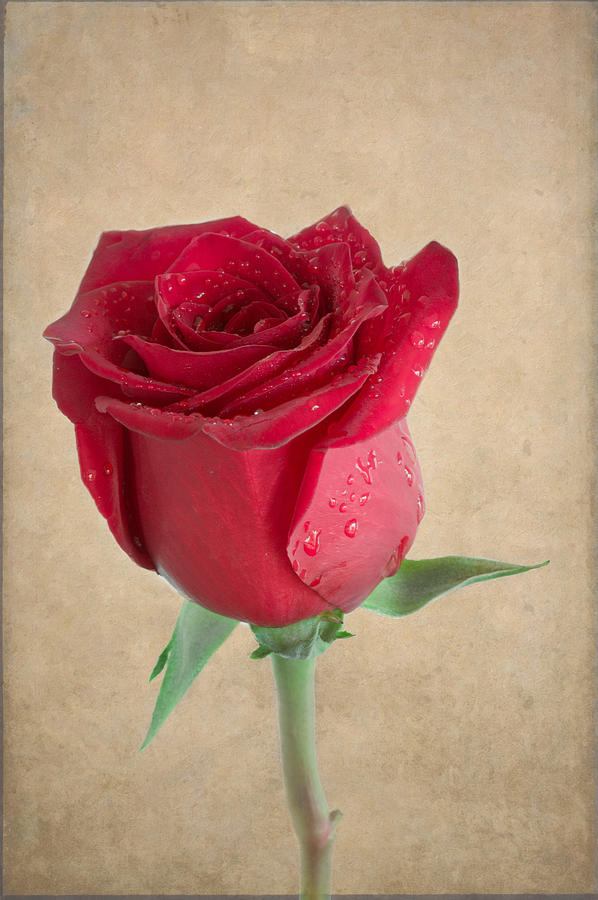 Be My Valentine by Garvin Hunter