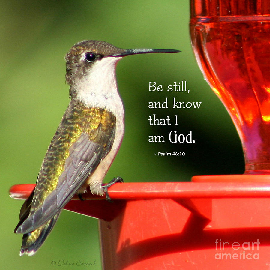 Hummingbird Photograph - Be Still And Know by Debra Straub