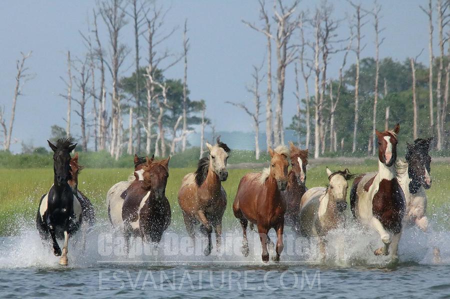 Wild Horses Photograph - Beach Boy Pixie DLS 3259 by Captain Debbie Ritter