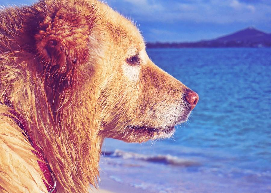 Dog Photograph - Beach Buddy  by JAMART Photography