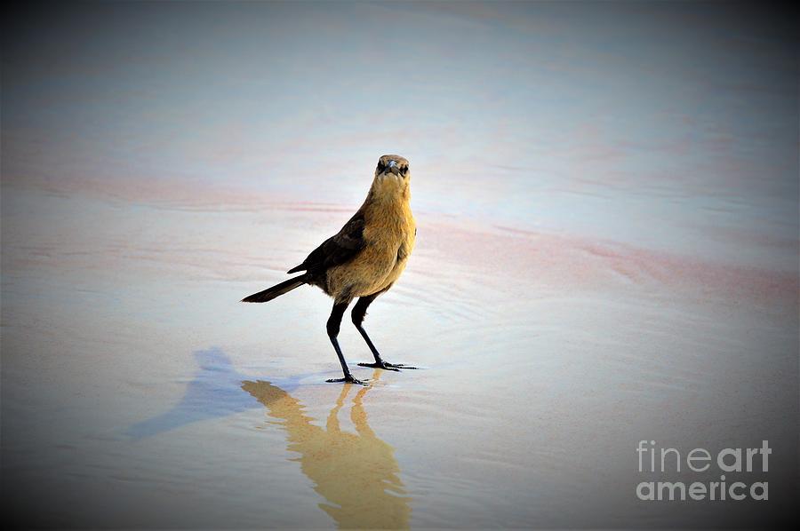 Bird Photograph - Beach Bum by Brigitte Emme