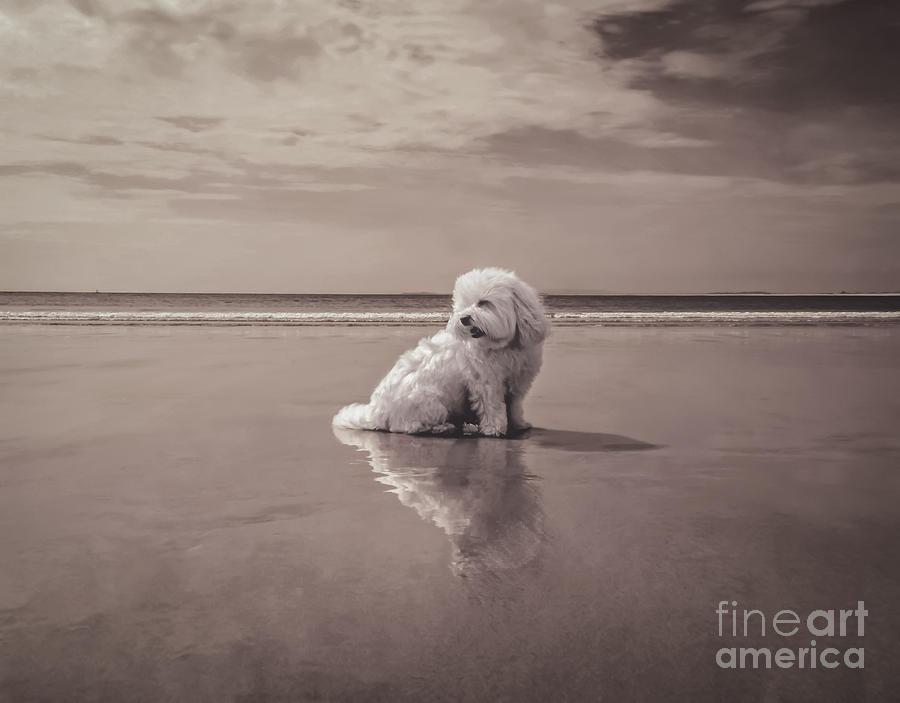 Beach Bum Photograph - Beach Bum by Charlie Cliques