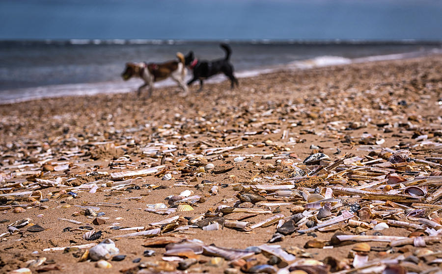Dog Photograph - Beach Dogs by Nick Bywater
