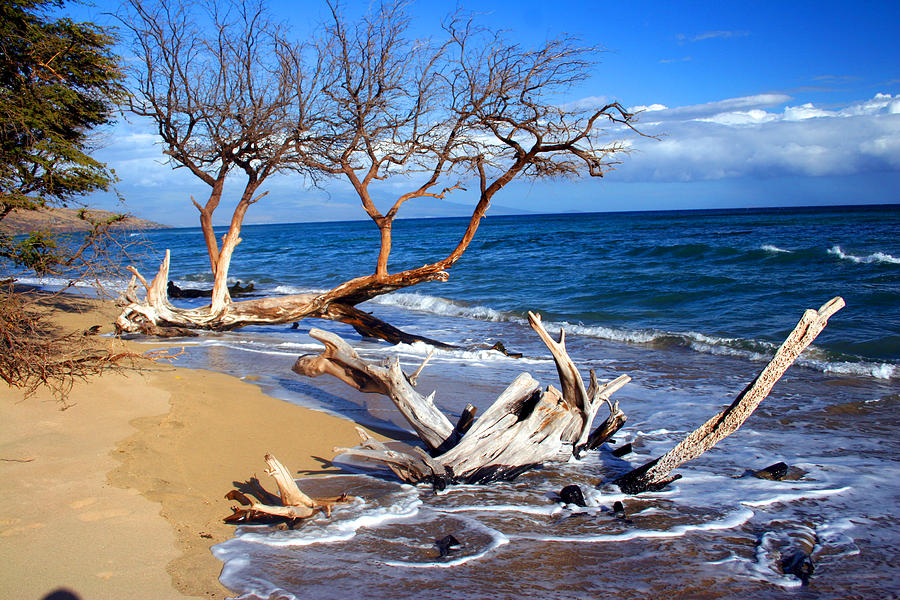 Beach Photograph - Beach Driftwood Fine Art Photography by James BO  Insogna