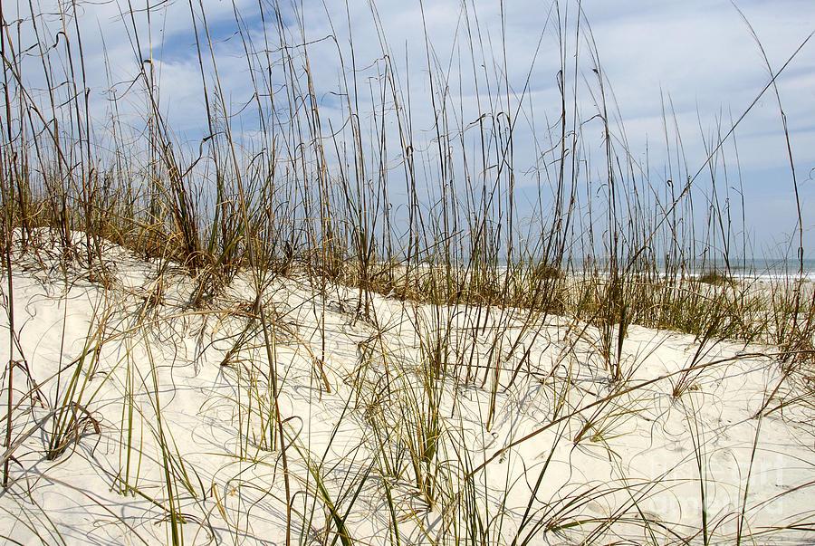 Beach Photograph - Beach Dunes by David Lee Thompson