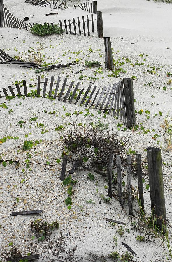 Beach Fence Photograph - Beach Fences by Kim Zwick