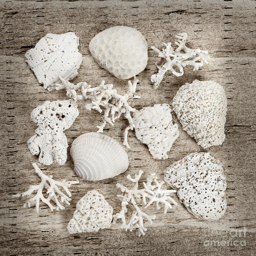 Shell Photograph - Beach Finds by Elena Elisseeva