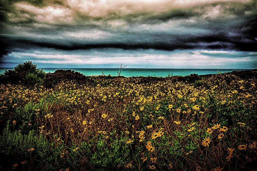 Beach Photograph - Beach Flowers by Joseph Hollingsworth