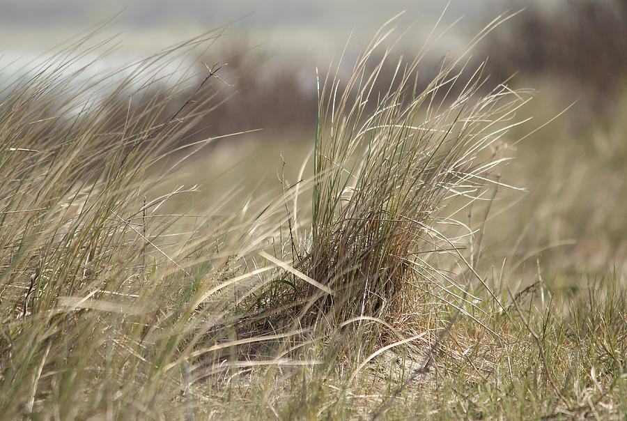 Nature Photograph - Beach Gras by Heike Hultsch