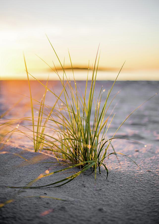 Beach Photograph - Beach Grass by Brad Wenskoski