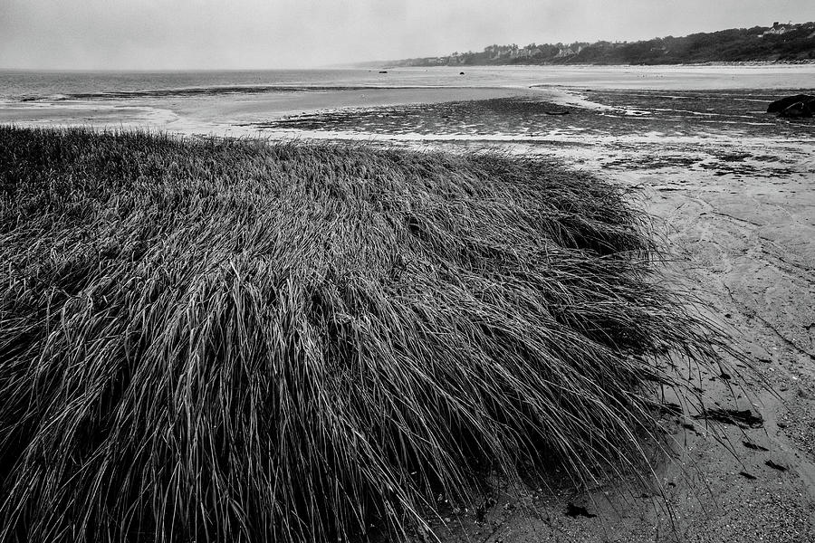 Beach Grass by Jim Gillen