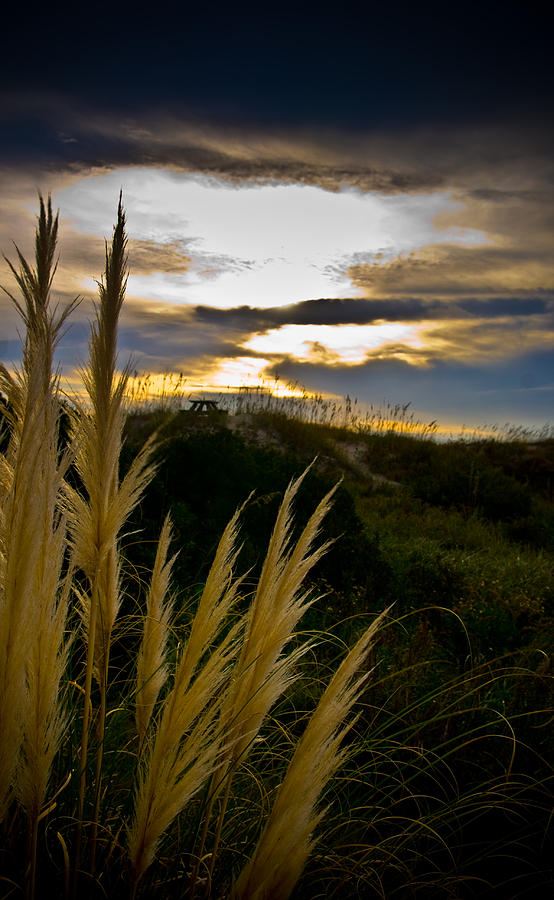 Grass Photograph - Beach Grass by Patrick  Flynn