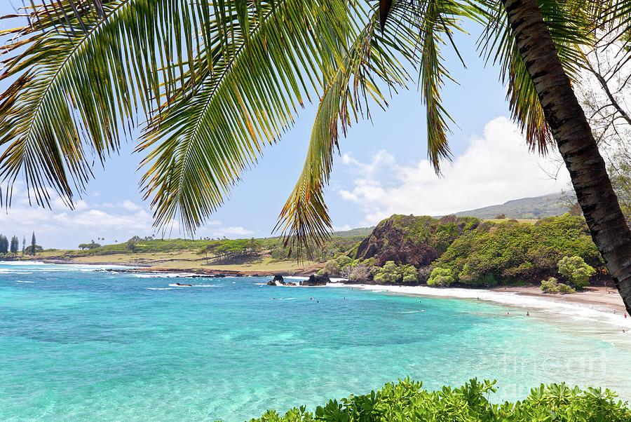 Beach Hawaii Palm Tree Photograph By Mike Swiet