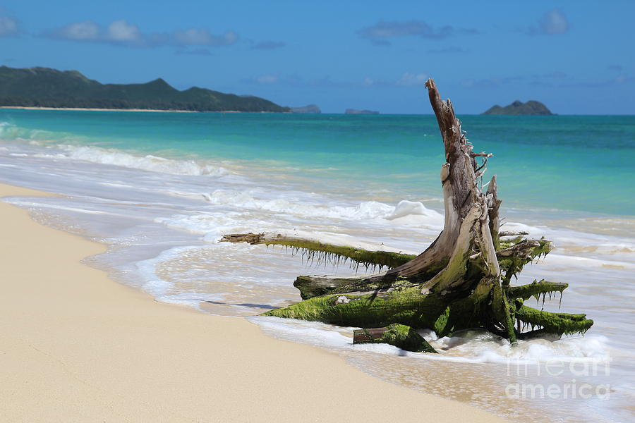 Beach Photograph - Beach In Hawaii by Anthony Jones