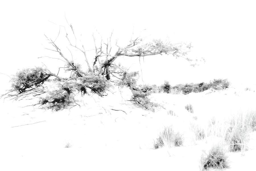 Tree Digital Art - Beach Morning Lone Tree On Dune by Randy Steele
