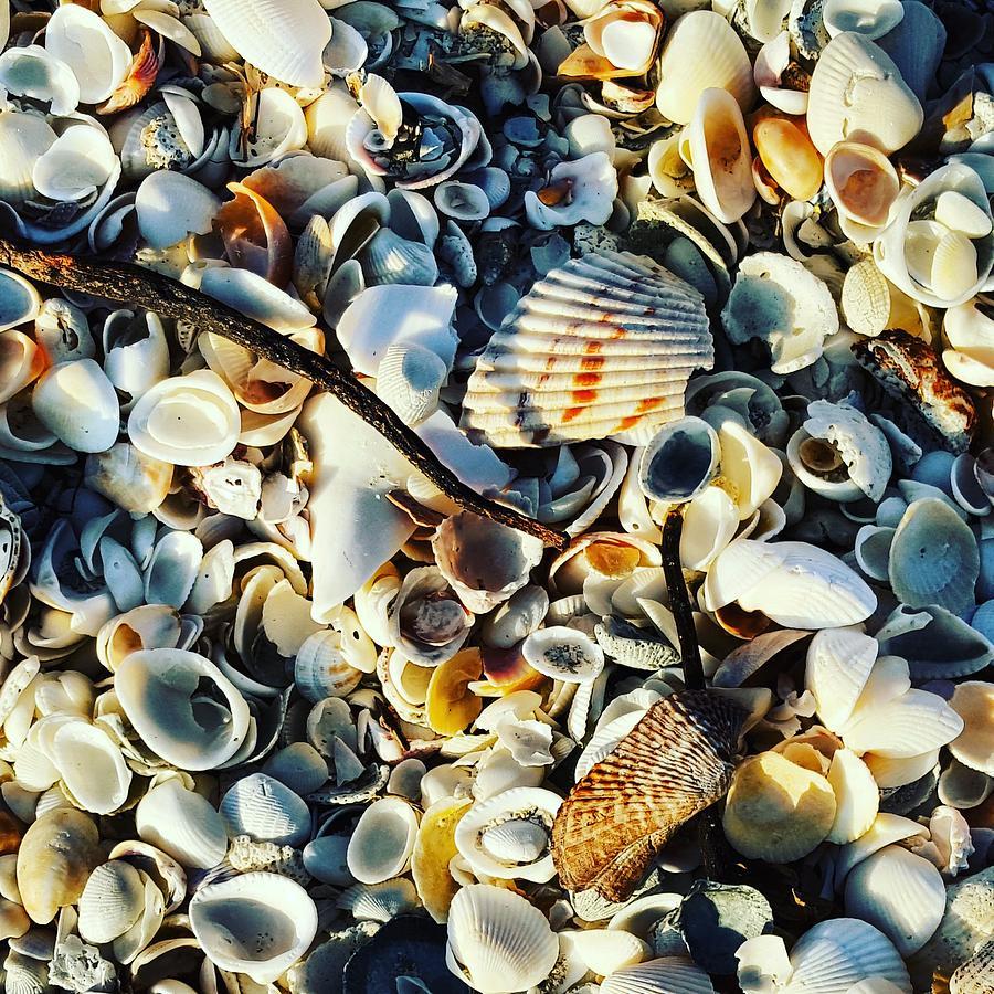 Shells Photograph - Beach of Shells by Ric Schafer