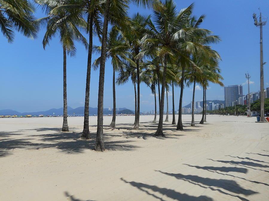 Beach Palms by Marlene Challis