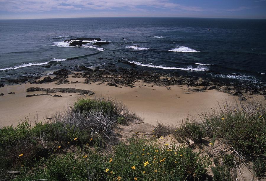 Beach Photograph - Beach Reef Point Wildflowers by Don Kreuter