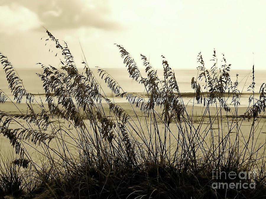 Sepia Photograph - Beach - Sepia by D Hackett