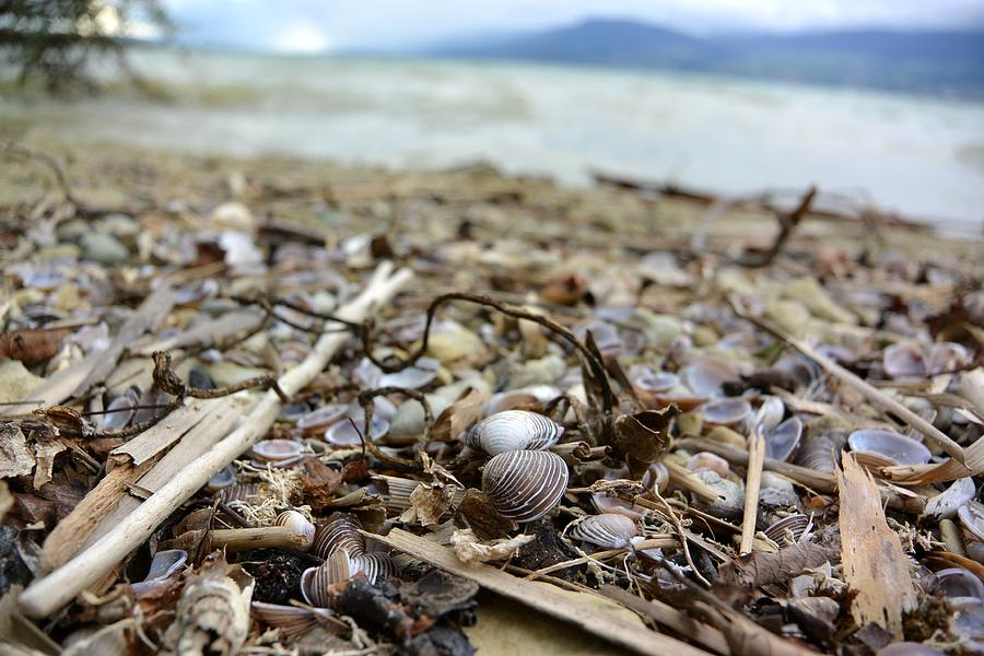 Shells Photograph - Beach Shells of Neuchatel by Two Small Potatoes
