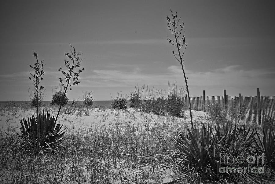 Rehoboth Photograph - Beach Spine by Jost Houk