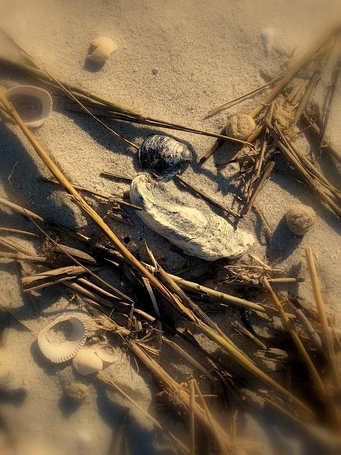Beach Photograph - Beach Still Life by Susanne Van Hulst