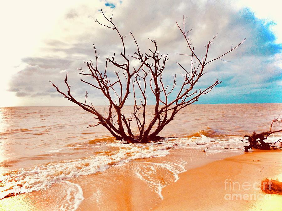 Beach tree by Amanda Jane Kohler