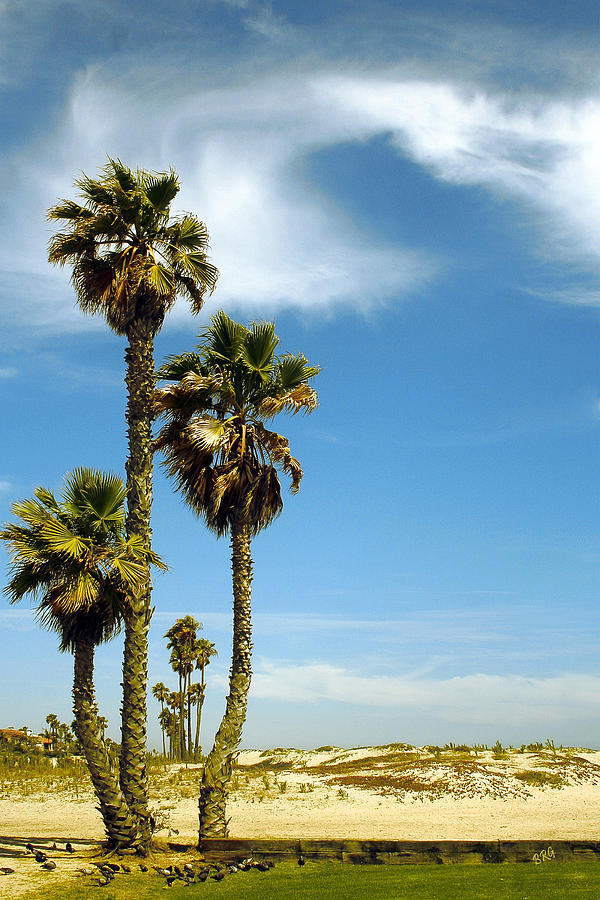 Beach Photograph - Beach View With Palms And Birds by Ben and Raisa Gertsberg