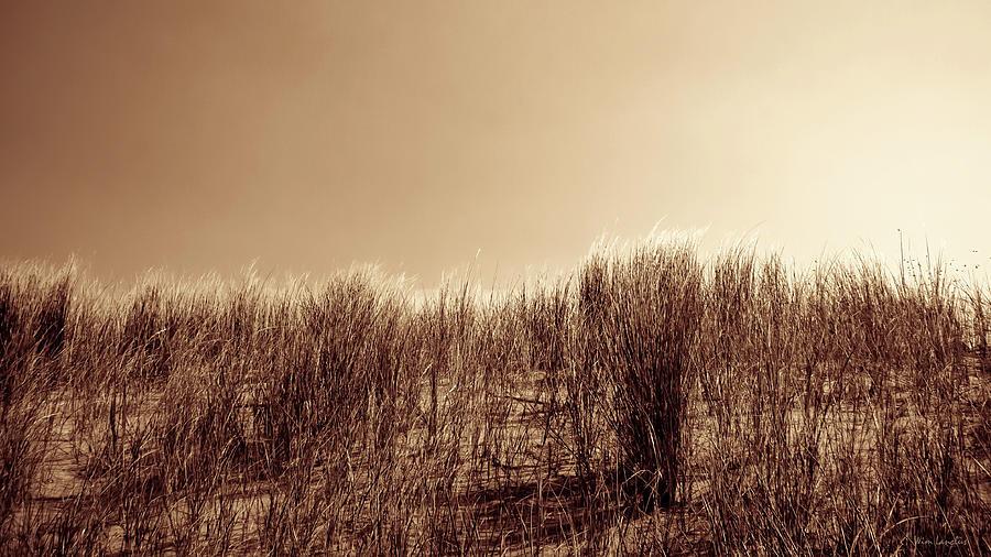 Beach Grass Photograph - Beachgrass in Sepia by Wim Lanclus