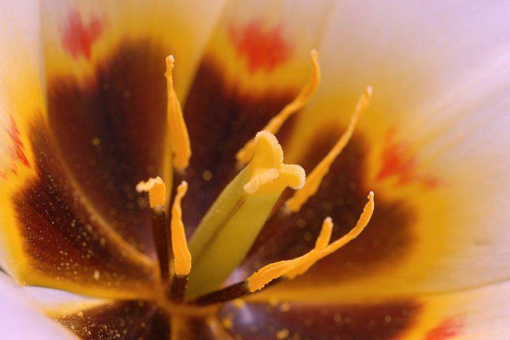 Yellow Photograph - Beacuty by Jacqueline Lewis
