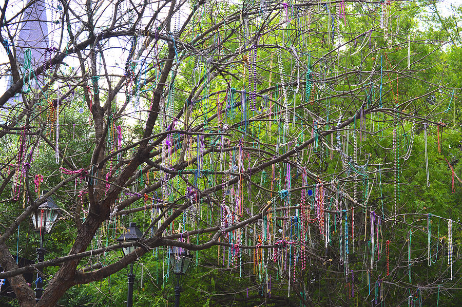 Beaded Branches Photograph