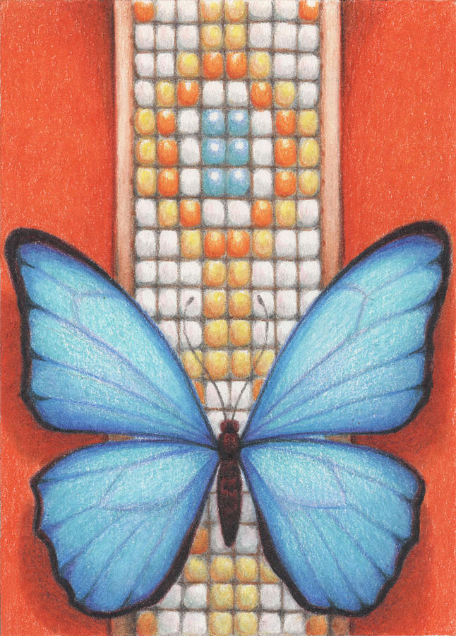 Blue Butterfly Drawing - Beaded Morpho by Amy S Turner