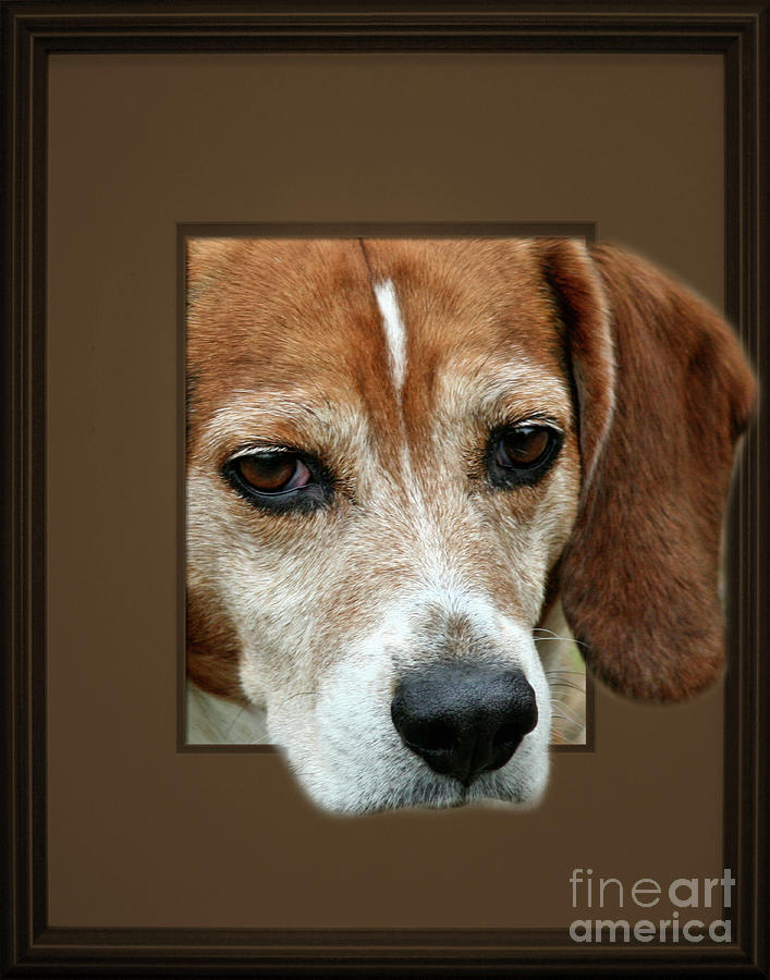 Beagle Peeking Out by Smilin Eyes  Treasures
