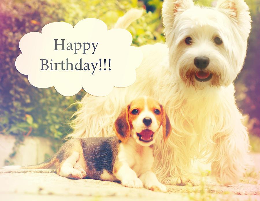 Beagle Puppy Westy Birthday Card Photograph By Sandra Rugina