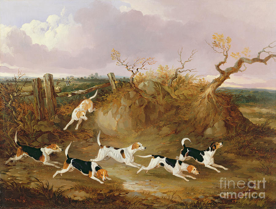 Beagles Painting - Beagles In Full Cry by John Dalby
