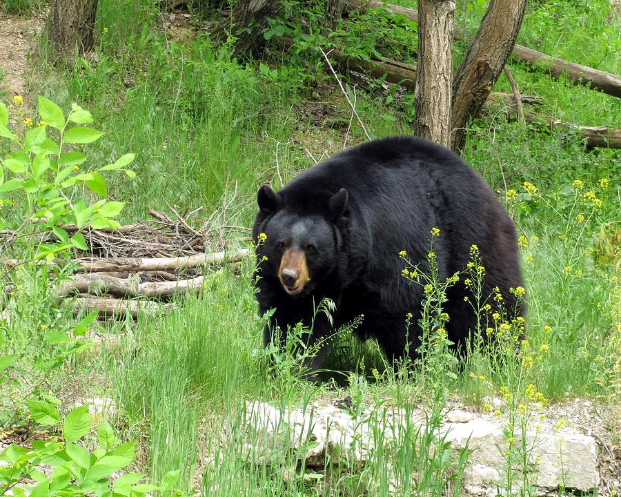 Bear Photograph - Bear 2 by George Jones