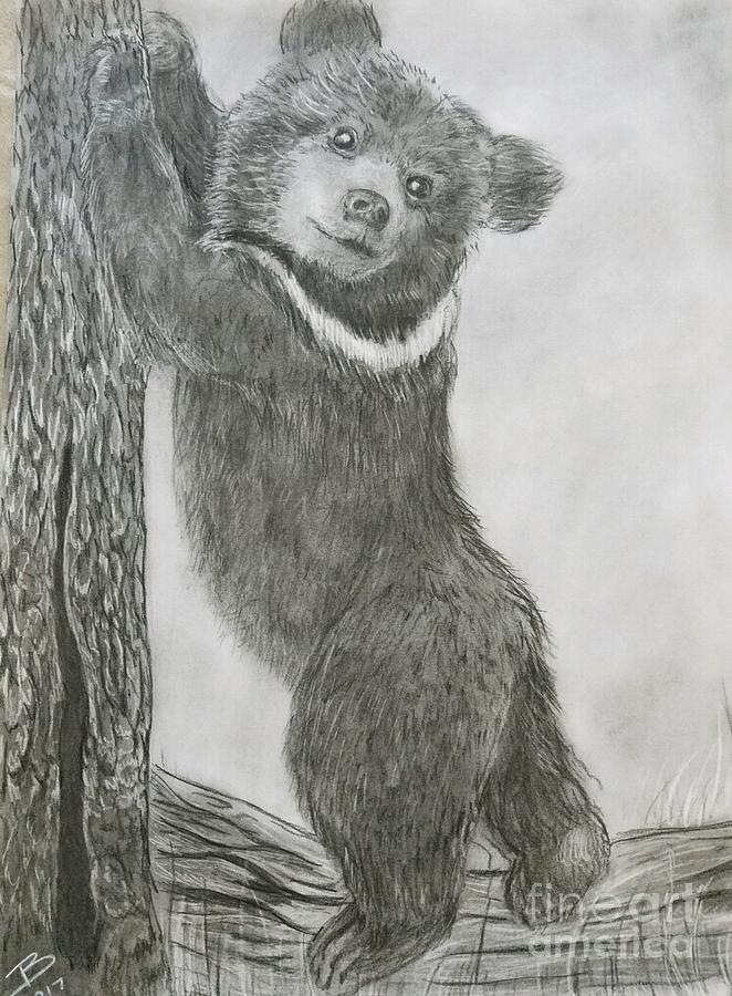 Bear Cub Drawing by Robert Polley