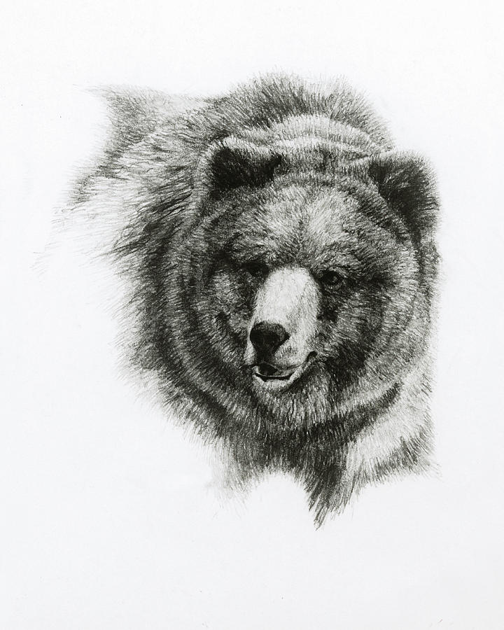 Bear Painting - Bear by Heather Theurer