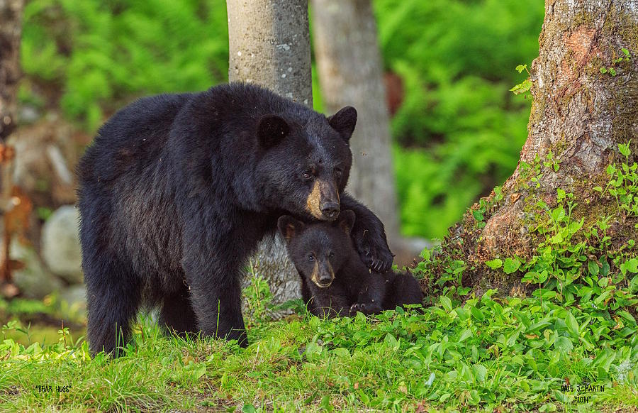Bear Hugs by Dale J Martin