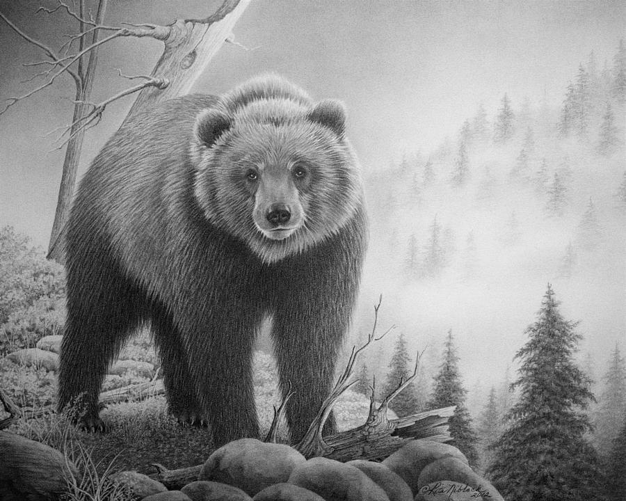 рисунки медведя карандашом для диванных