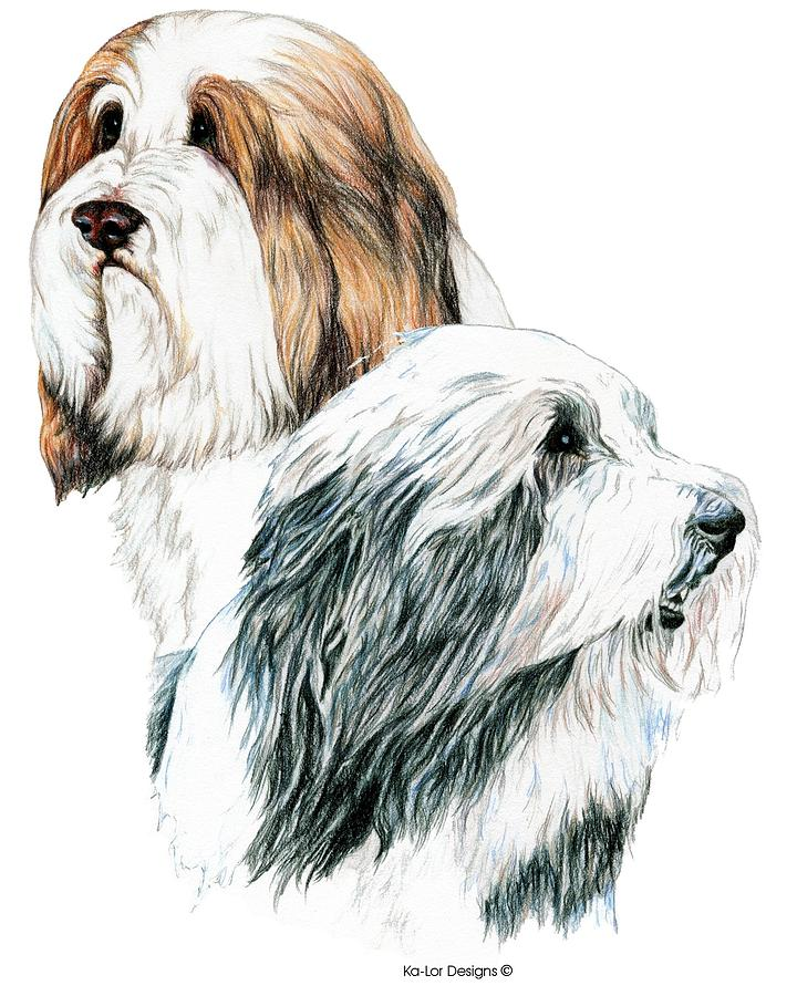 Bearded Collies Drawing - Bearded Collies by Kathleen Sepulveda