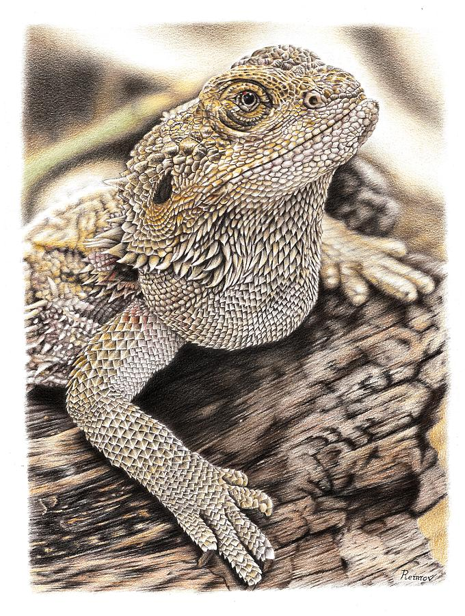 Bearded Dragon by Remrov
