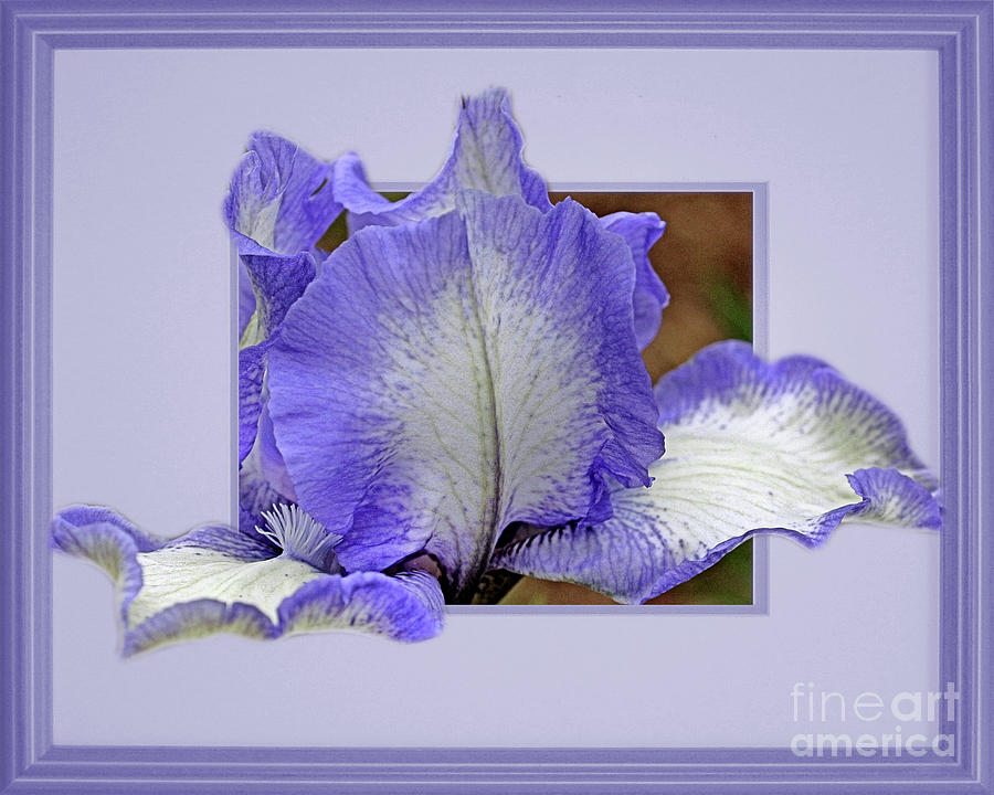 Bearded Iris Flower Peeking Out by Smilin Eyes  Treasures