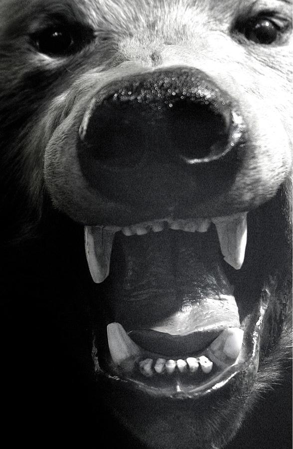 Photographer Photograph - Beared Teeth by Jez C Self