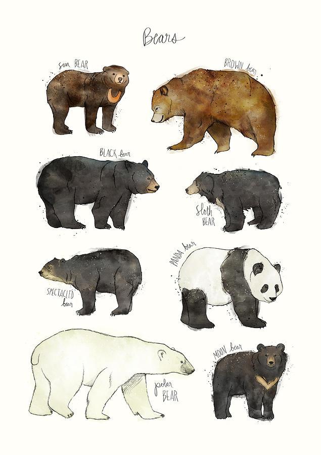 Bear Drawing - Bears by Amy Hamilton
